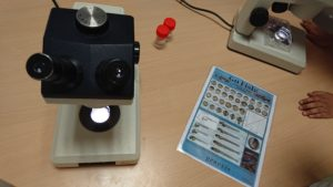 observation à la loupe binoculaire du développement du poisson zèbre en s'aidant de la table de développement illustrée
